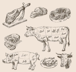 food-market-illustration-animals